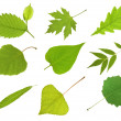 Collection leaves — Stock Photo