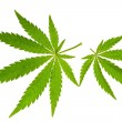 Stock Photo: Marijuanleaf