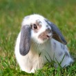 Foto Stock: Beautiful rabbit