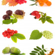 Collection plants — Stock Photo #8033877