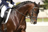 Horse dressage outdoors — Stock Photo