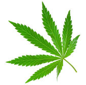 Marijuana leaf — Stock Photo