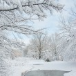 Winter picture — Stock Photo