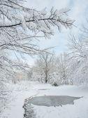 Vinterbild — Stockfoto