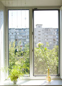 Fenster — Stockfoto