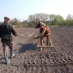 Farmer at work — Stock Photo #8243590