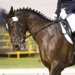 Stock Photo: Dressage horse