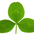 Clover on isolated — Stock Photo