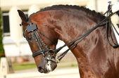 Ujeżdżenia konia — Zdjęcie stockowe