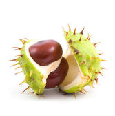 Chestnuts on isolated — Stock Photo