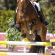 Stock Photo: Equestrishow jumping
