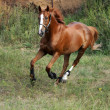 Running horse — Stock Photo #8353712