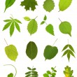 Stock Photo: Collection leaves