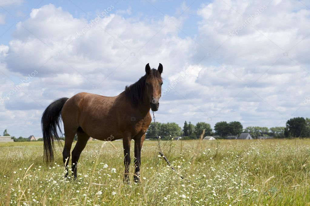 Horse on field in summer — Stock Photo #8373371
