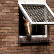 Horse on stable — Stockfoto
