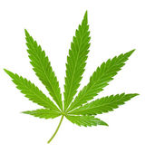 Hemp leaf — Stock Photo