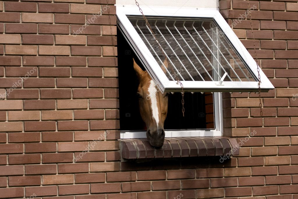 Head of a horse looks out of a stable — Stock Photo #8412885
