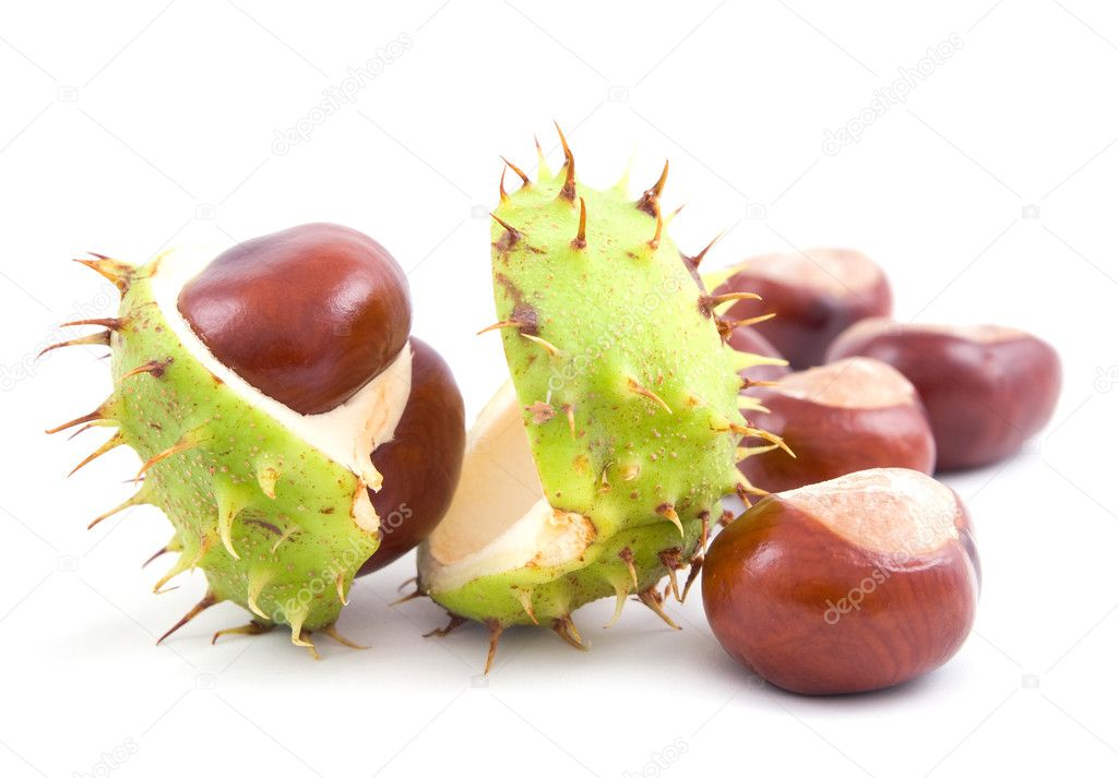 Chestnuts isolated on a white background  Stock Photo #8413007