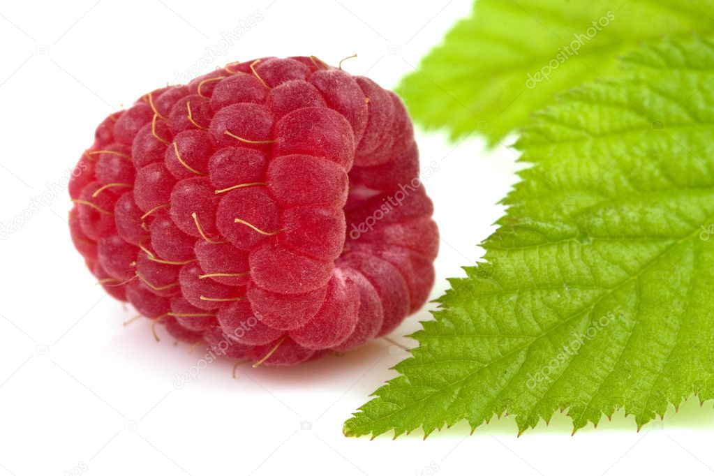 Raspberry and leaf isolated on  white — Stock Photo #8413021