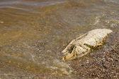 мертвая рыба — Стоковое фото