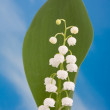 Lily of the valley — Stock Photo #8543602