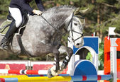 Equestrian show jumping — Stock Photo