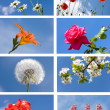 Collection spring flowers — Stock Photo #8836489