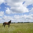Horse on a pasture — Stock Photo #8836548