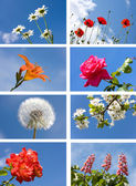 Collection spring flowers — Stock Photo