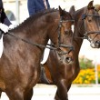 Dressage horses — Stock Photo
