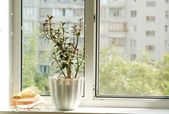 Window and flowerpot — Stock Photo