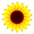 Stock Vector: Icon of sunflower