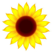 Icon of sunflower — Stock Vector