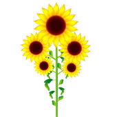 Sunflower with no background — Stock Vector