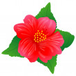 Hibiscus — Stock Vector #10482572
