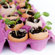 Royalty-Free Stock Photo: Green seedlings growing out of soil in egg shells