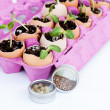 Green seedlings growing out of soil in egg shells - Stock Photo
