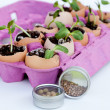 Green seedlings growing out of soil in egg shells — Stock Photo #10146230