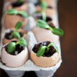 Green seedlings growing out of soil in egg shells — Stock Photo #10146309