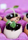 Green seedling growing out of soil in the egg — Stock Photo