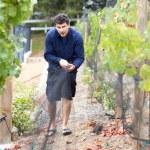 Grape Harvest — Stock Photo #8494168