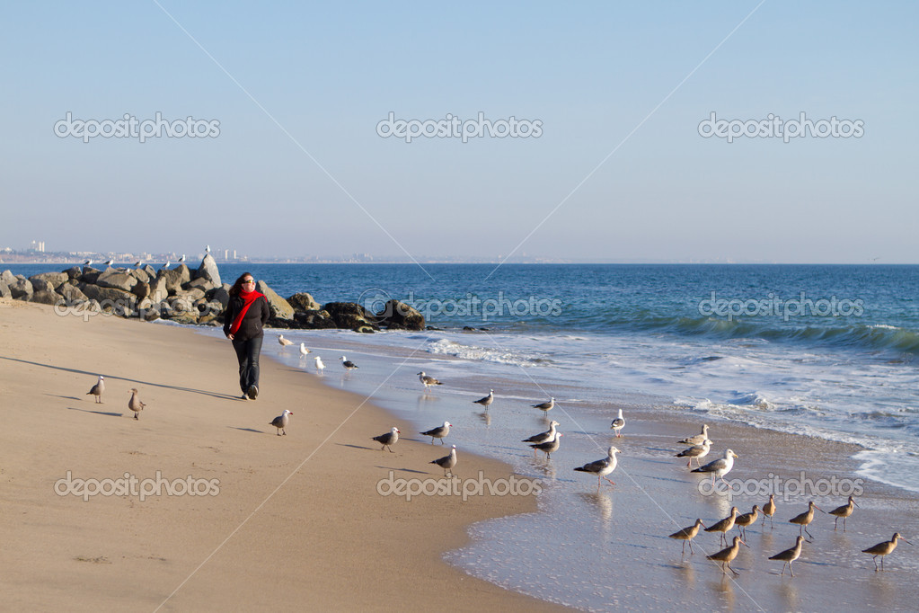 Shoreline in Malibu  California with a flock of Seagulls and a woman Walking  Stock Photo #8924954
