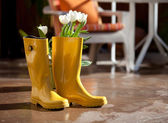 April Showers Bring May Flowers — Stock Photo