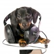 Dog with a mp3 player and Headphones — Stock Photo