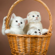 Stock Photo: Fluffy little kittens