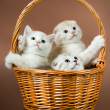 Fluffy little kittens - Stock Photo