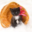 Stock Photo: Fluffy little kitten