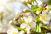Kwiat i pszczoła — Zdjęcie stockowe