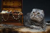 O gato. — Fotografia Stock