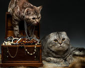 Kočka. — Stock fotografie